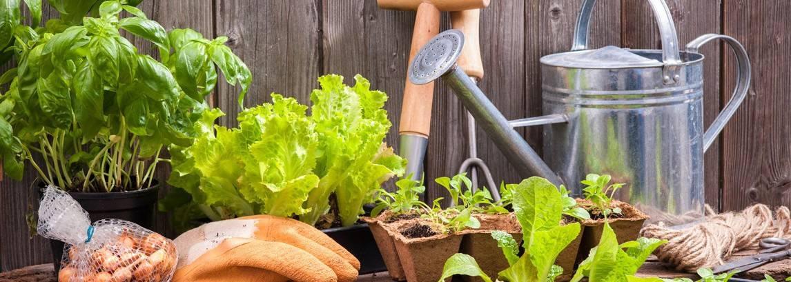 20 tips om een goede tuinman te worden