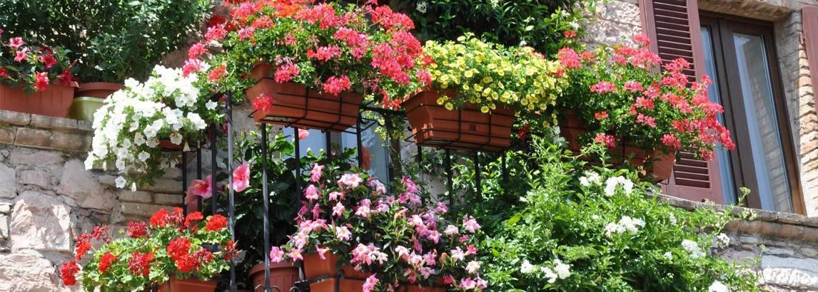 Hoe een balkontuin te beginnen