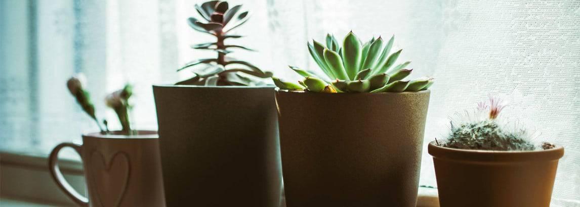 Tien eenvoudige tips voor het houden van gezonde kamerplanten