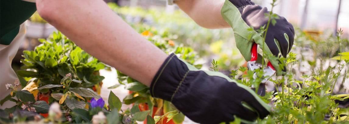 5 redenen om planten te snoeien voor nieuw leven