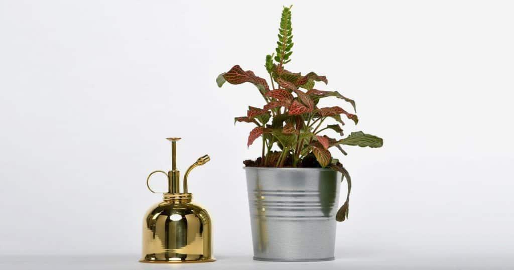 Beste plantenspuiten